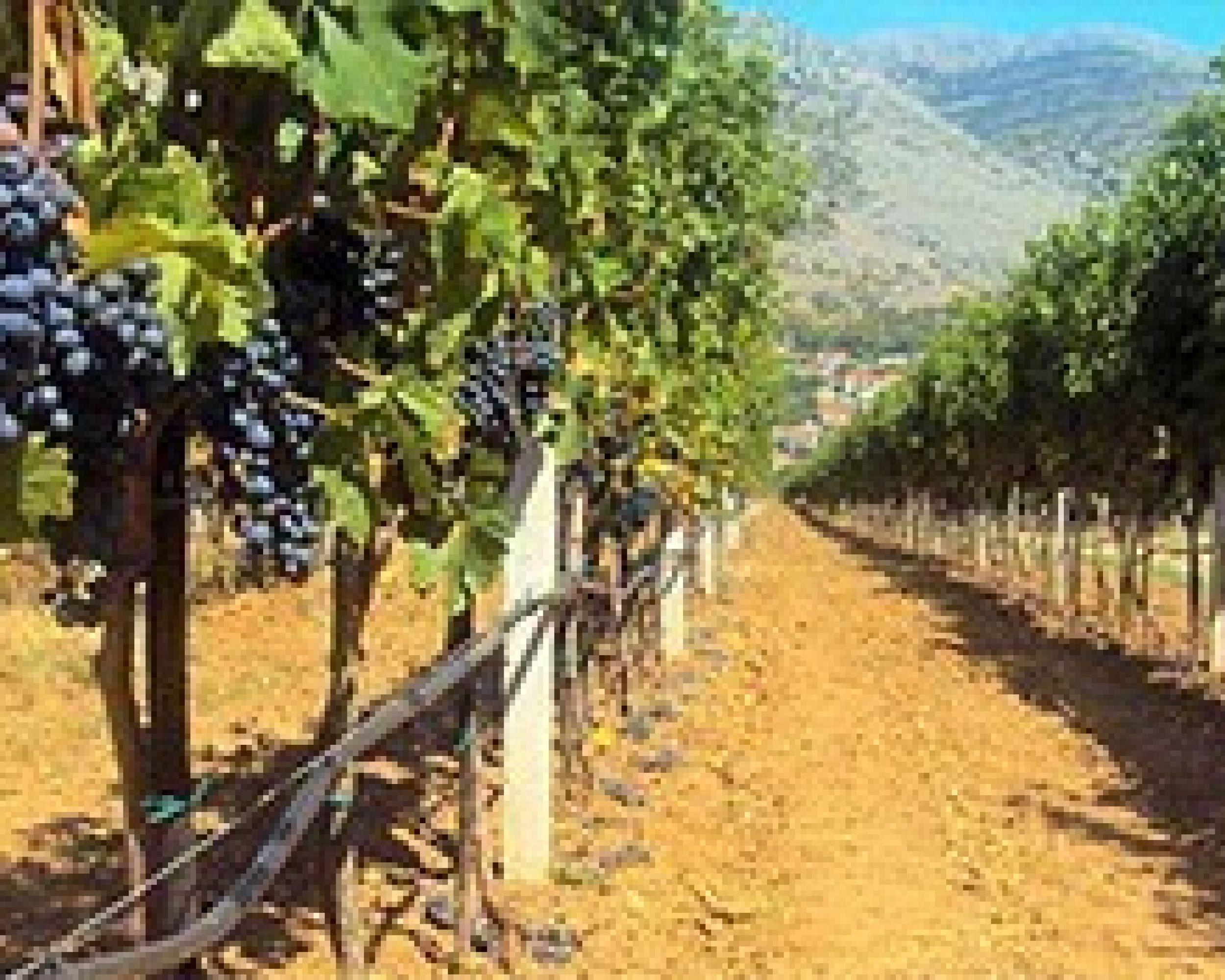 Wine tourism (Dubrovnik optional)