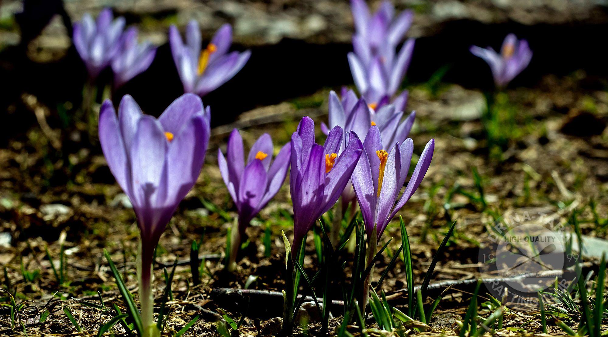 Ljekovite I rijetke biljke u Nacionalnom parku Sutjeska